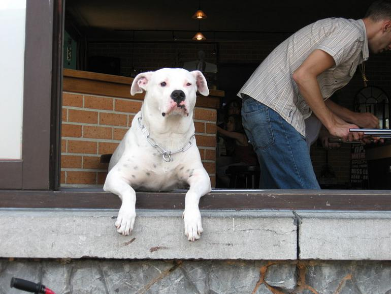 Může pronajímatel zvýšit nájemné kvůli psovi v bytě?