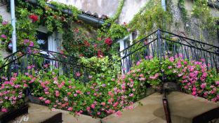 Detail balkonu porostlého květinymi.