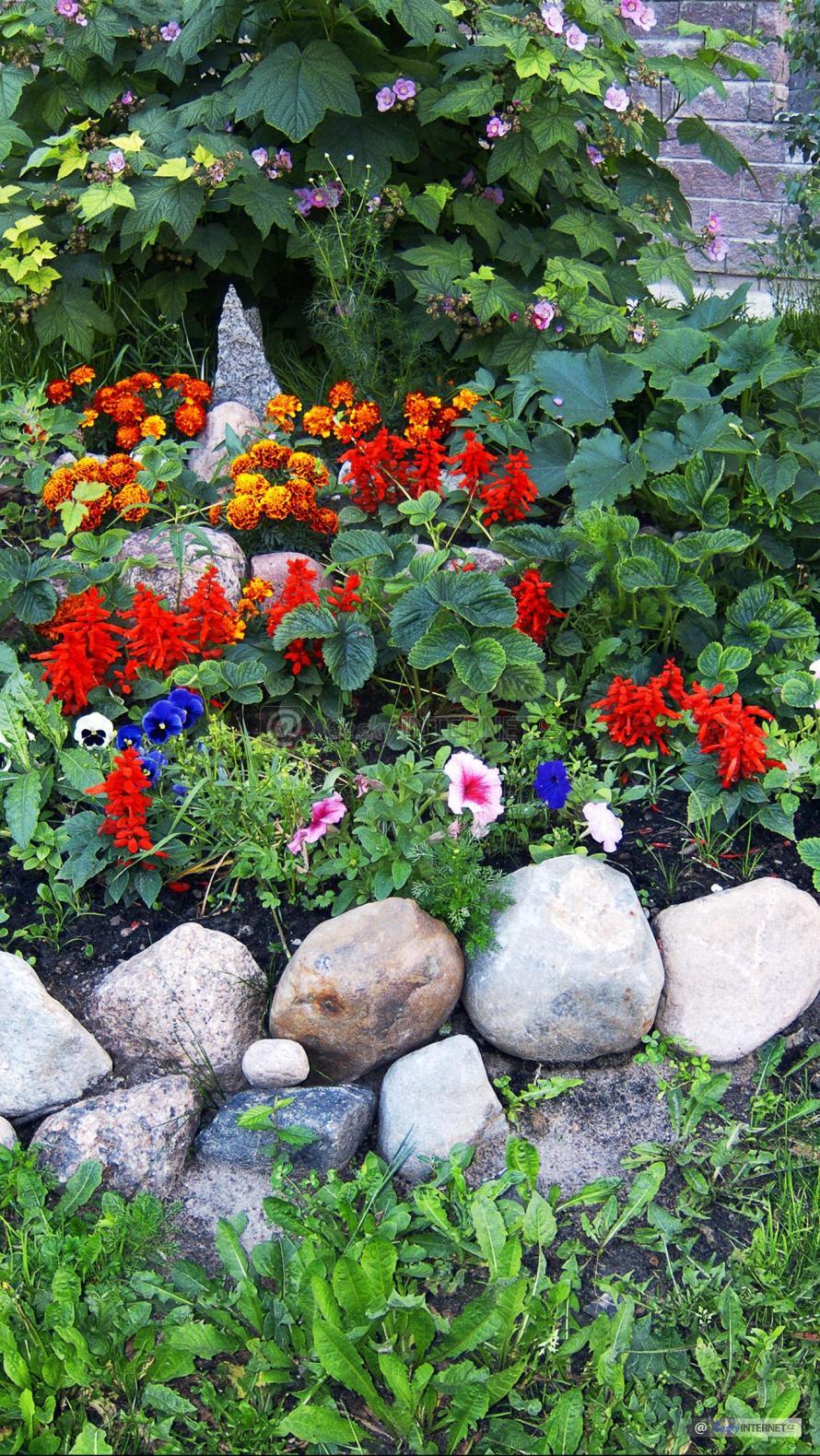 Kvetoucí květiny na skalce.