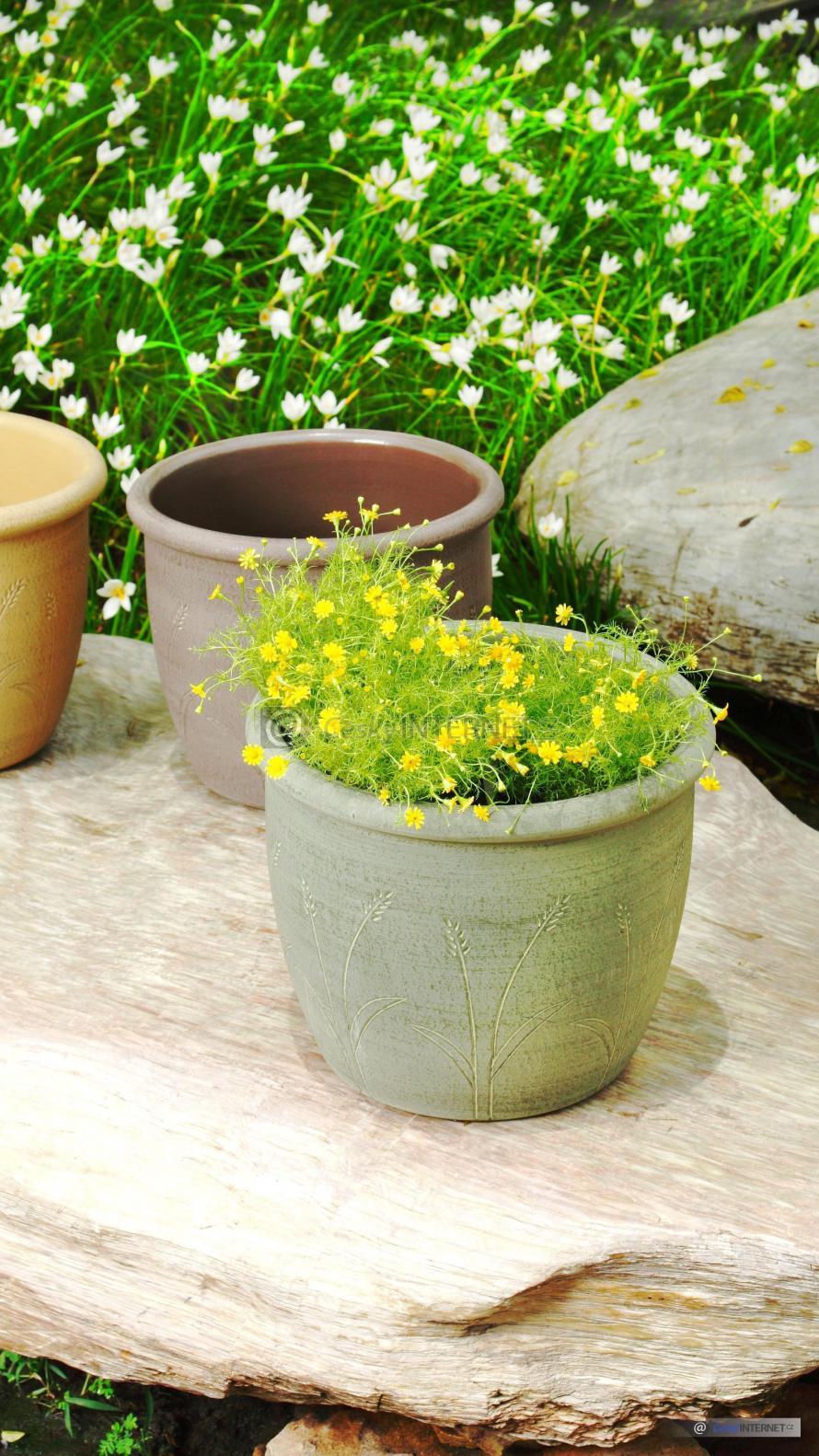 Detail truhlíků a květin.
