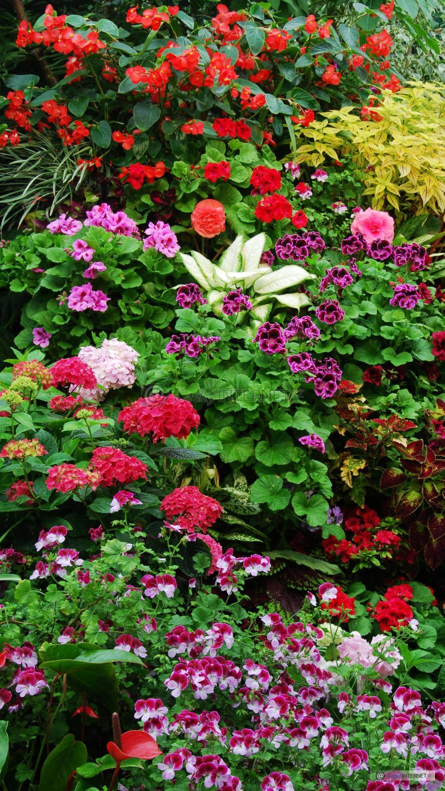 Rozkvetlé květiny.