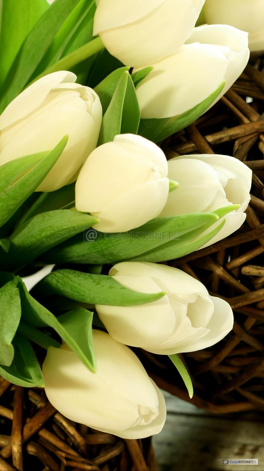 Detail květů tulipánů.