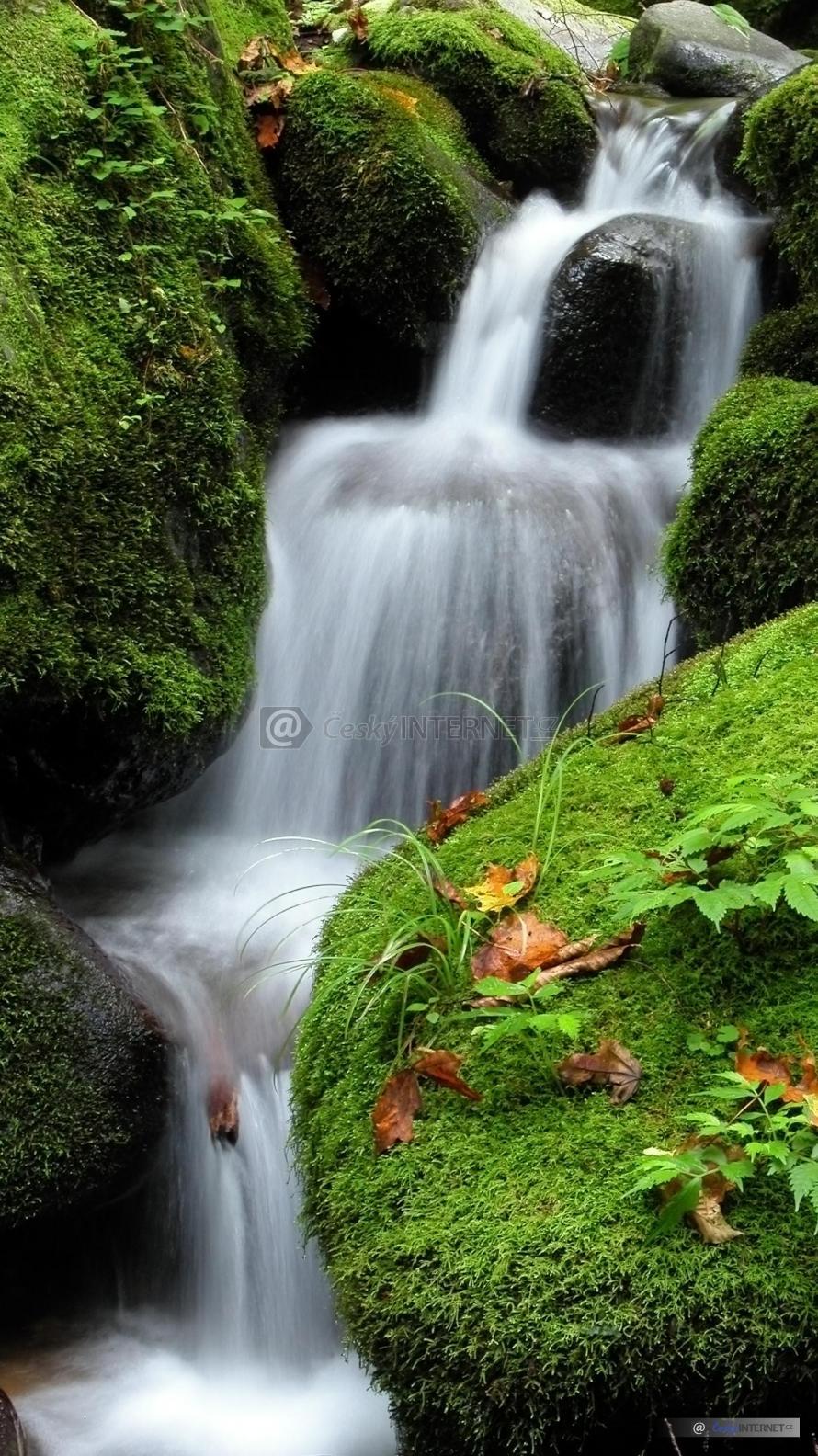Potok s drobnými vodopády uprostřed přírody - detail.