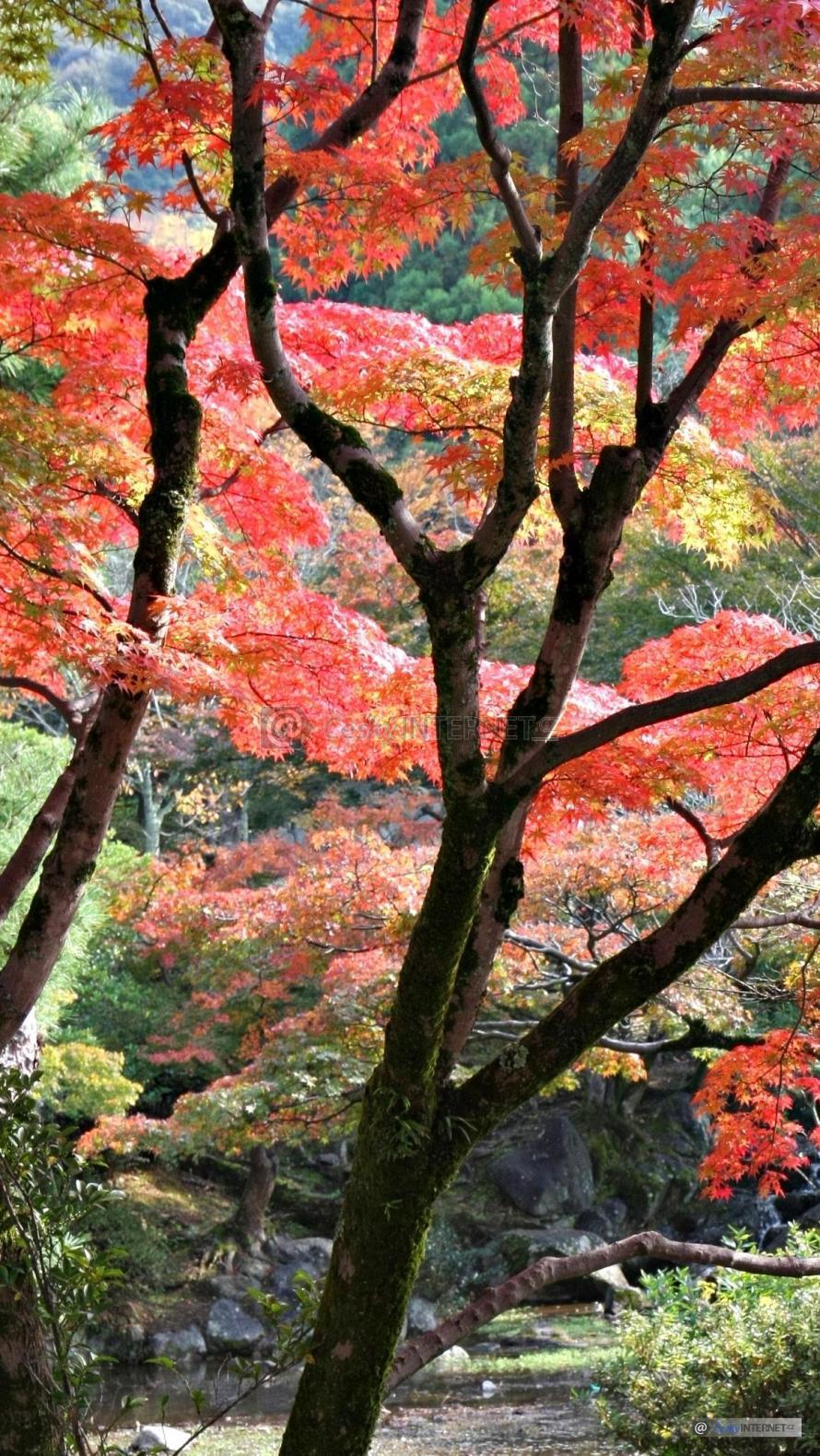 Zahrada na podzim jako japonská.