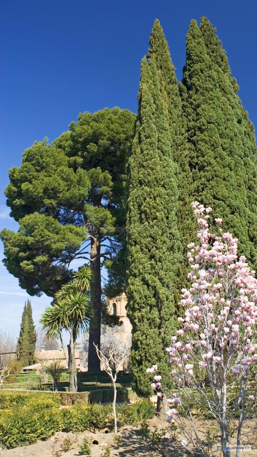 Exotický park s kvetoucí magnólií.