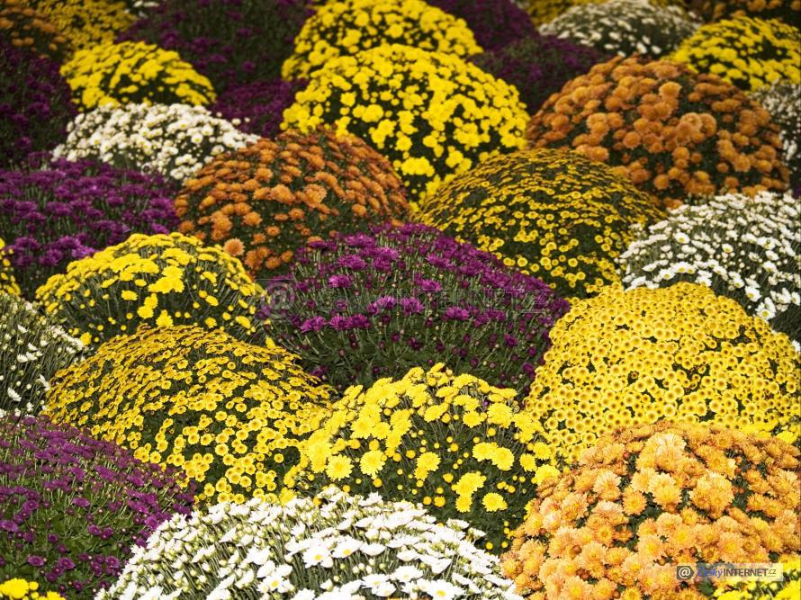 Květiny.