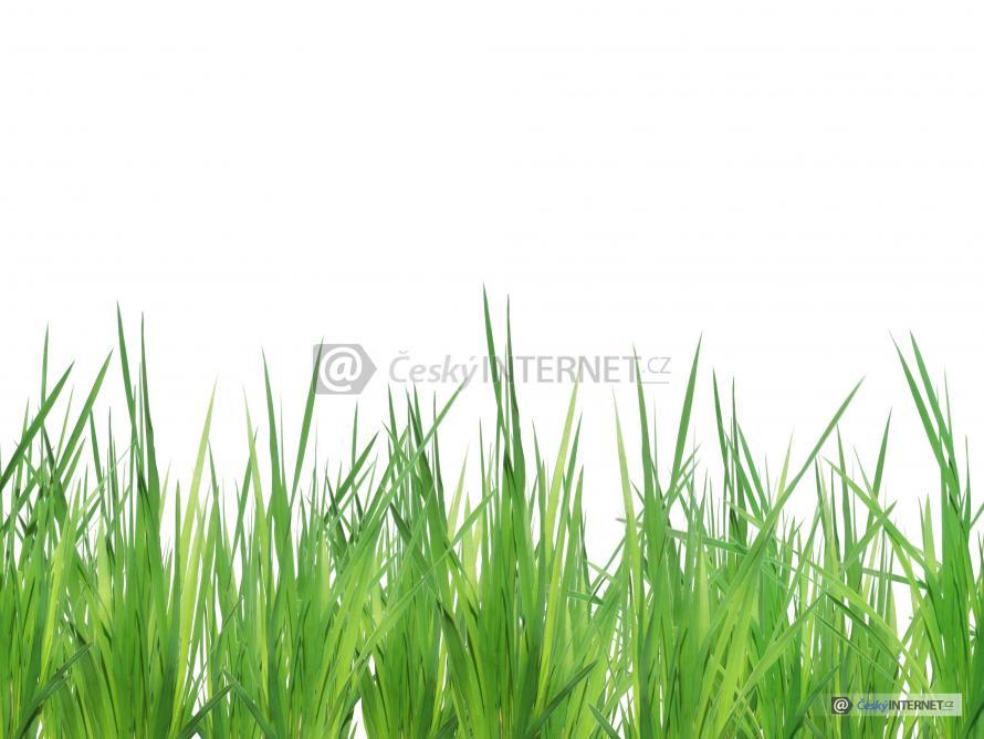 Detail trávy, trávník, louka.
