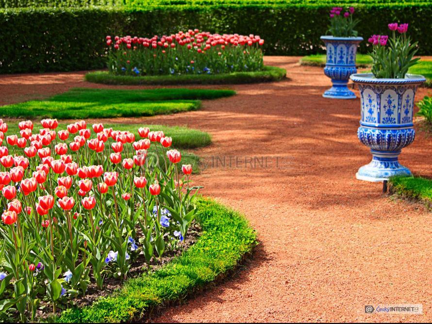 Rozkvetlé tulipány v parku.