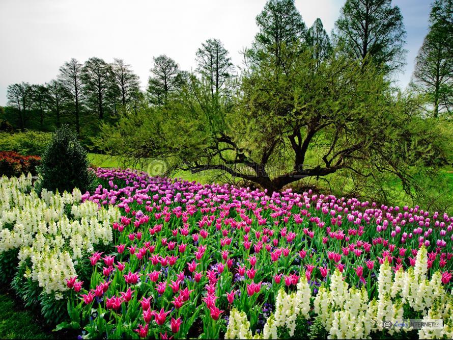 Rozkvetlé květiny v parku.