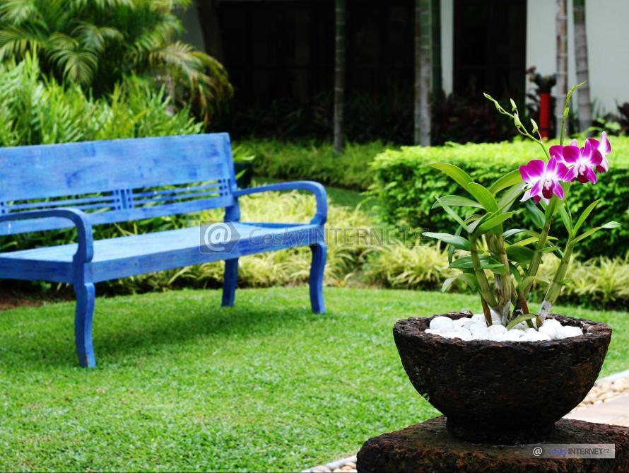 Lavička v okrasné zahradě, detail květiny.