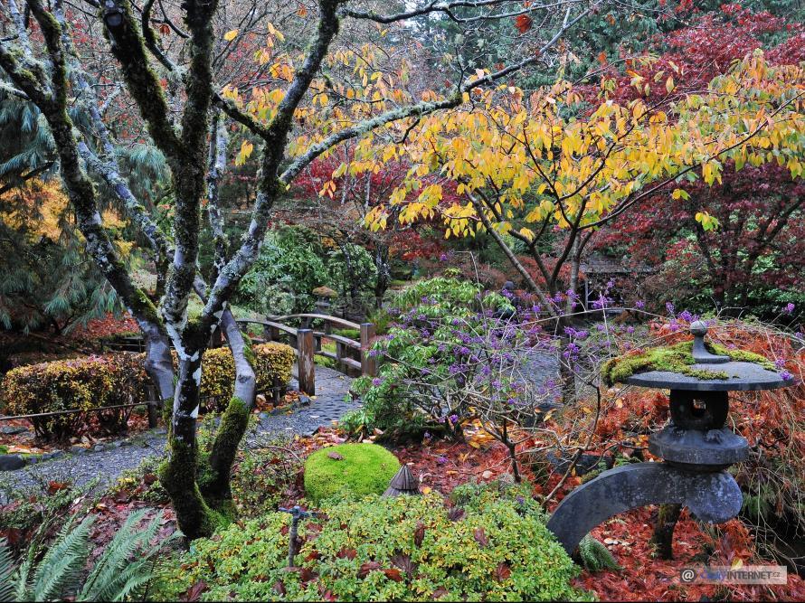 Japonská zahrada na podzim.