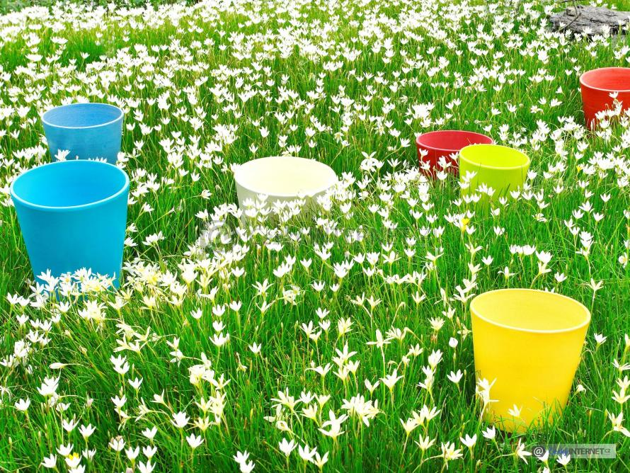 Rozkvetlé květiny, truhlíky.