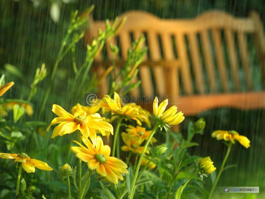 Zahrada s rozkvetlými květinami a lavičkou v dešti.