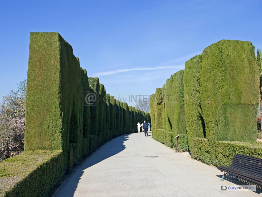Cesta mezi živými ploty, lavička, exotika.