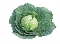 Rostlina | Brassica oleracea, Zelí hlávkové