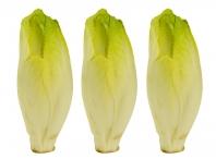 Rostlina | Cichorium intybus var. foliosum, Čekanka salátová