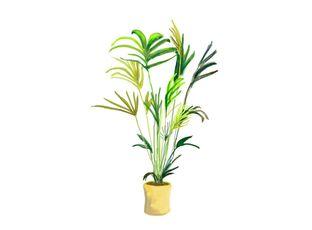 Rostlina | Kokosovník, Cocos weddelina,Microcoelum weddelianum,Syagrus weddeliana