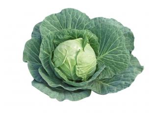 Rostlina | Zelí hlávkové, Brassica oleracea
