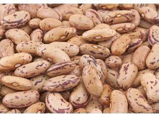 Rostlina | Fazol obecný, Phaseolus vulgaris