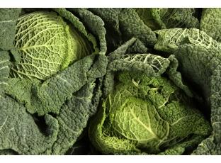 Rostlina | Kapusta hlávková, Brassica oleracea L. conv. oleracea var. sabauda L