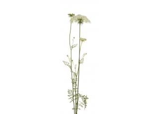 Rostlina | Čechřice vonná, Myrrhis odorata
