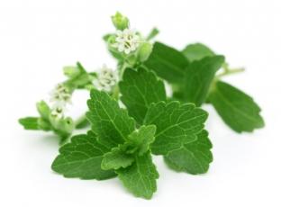 Rostlina | Stévie sladká, Stevia rebaudiana