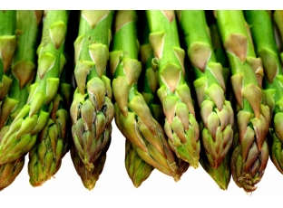 Rostlina | Chřest lékařský, Asparagus officinalis