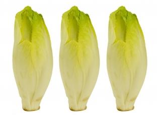 Rostlina   Čekanka salátová, Cichorium intybus var. foliosum