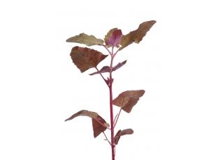 Rostlina | Lebeda zahradní, Atriplex hortensis